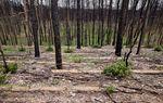 Bastrop State park on April 16, 2012.