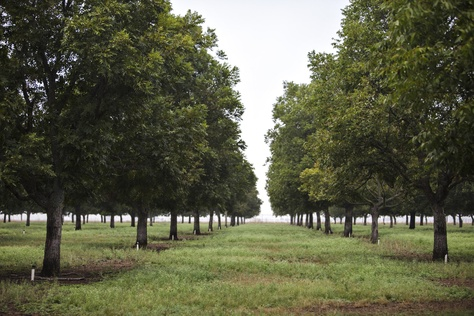 Glenn and JoLynn Bragg invested in growing pecans in Hondo, Texas, before groundwater pumping regulations existed there. A recent landmark court decision found that the regulations resulted in a violation of their property rights.