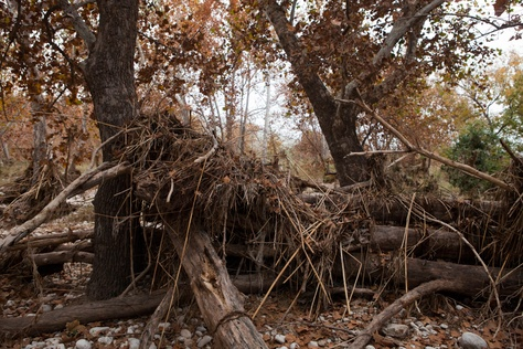 A look at tree trunks and brush that washed down from the cliffs during a flood on the Dolan Falls Preserve.