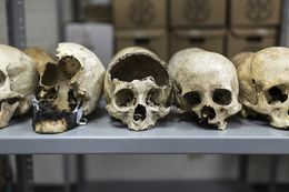 Skulls on which forensic investigations are being conducted at the morgue in San Salvador, El Salvador.