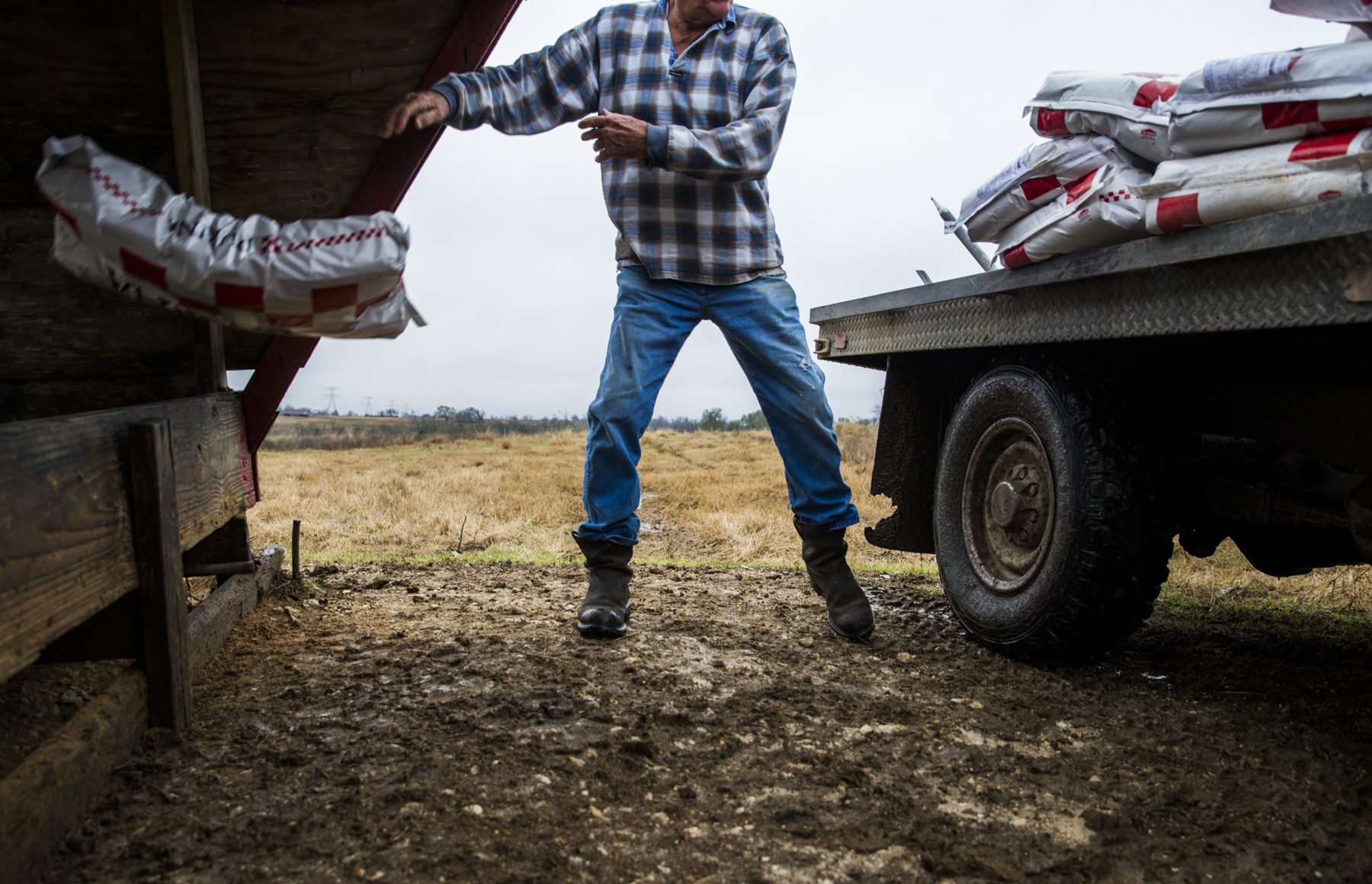 John Stoneham throws a bag of feed in to a troth for his cows at his ranch on January 18, 2017 in Grimes County. The roughly 1,000-acre ranch is in the proposed path of a high speed rail line. If the rail is built, Stoneham could lose about 50 acres of land in the middle of his property, limiting his access to grazing pastures.
