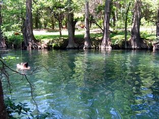 The Blue Hole springs in Wimberley