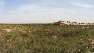 Texas is home to 95 state parks, including Boca Chica State Park.