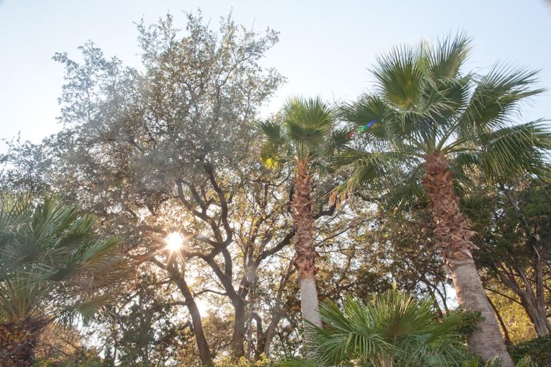 Plantation found around the Summit Community, along Westlake Drive, Austin, Texas.