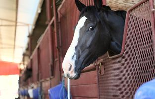 The Texas Racing Commission is facing a precarious future, with state lawmakers now requiring that it get written permission to continue operating.It's currentlyworking under a 90-day extension. Suchuncertainty is a problem for horse breeders and trainers, who have to plan more than a year out from their next race.